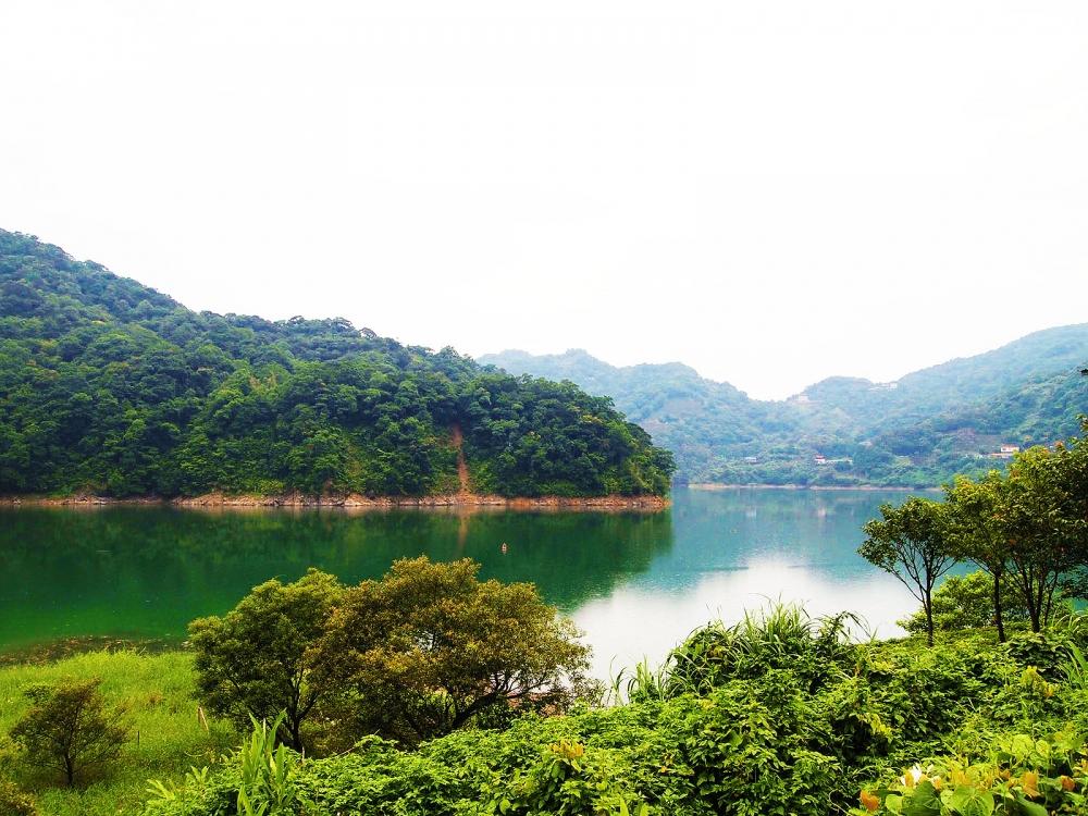 石碇千岛湖之八卦山茶园